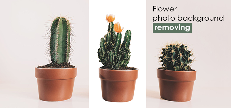 Flower photo background removing