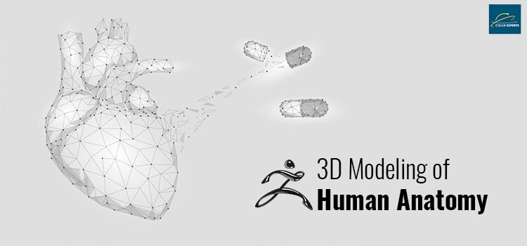 3D Modeling of Human Anatomy
