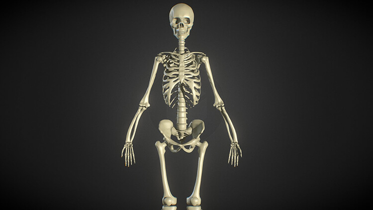 Skeleton Modeling